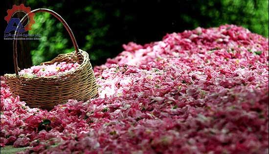خشک کردن به روش طبیعی-مقاله دستگاه خشک کن گل محمدی