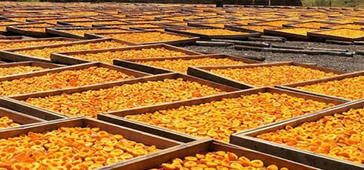 خشک کردن میوه طبیعی-مقاله دستگاه خشک کن صنعتی چیست