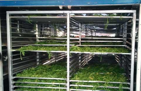 سبزی خشک شده در دستگاه خشک کن تونلی