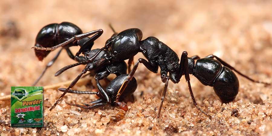 عکس سر صفحه مقاله دستگاه ساشه پودر مورچه